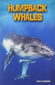 نهنگ های کوهان دار