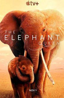 ملکه فیل